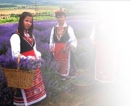 essential oil sourcing