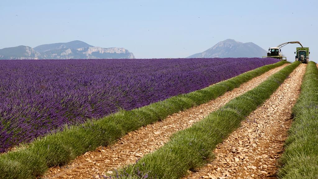 Photo taken by Mel Brown, CCO/Owner, visiting a lavender grower's fields in Bulgaria.