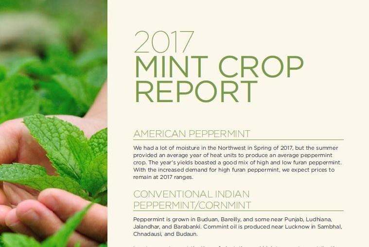 Mint Crop Report
