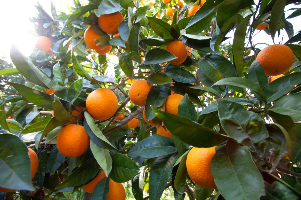 Photo taken by Alan Brown, CSO/Owner, during a field visit to our citrus grower in Italy.