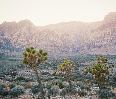 Desert Dreams is crisp citrus top notes and floral mid-notes.