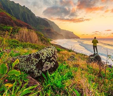 Hawaiian Rainforest  captures the natural beauty of Hawaii