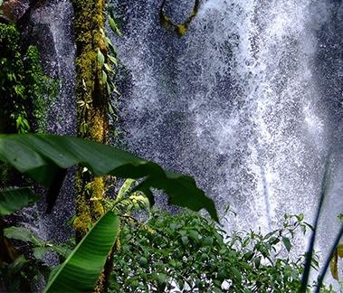 Hawaiian Rainforest, an exclusive fragrance by Jim Fuchs