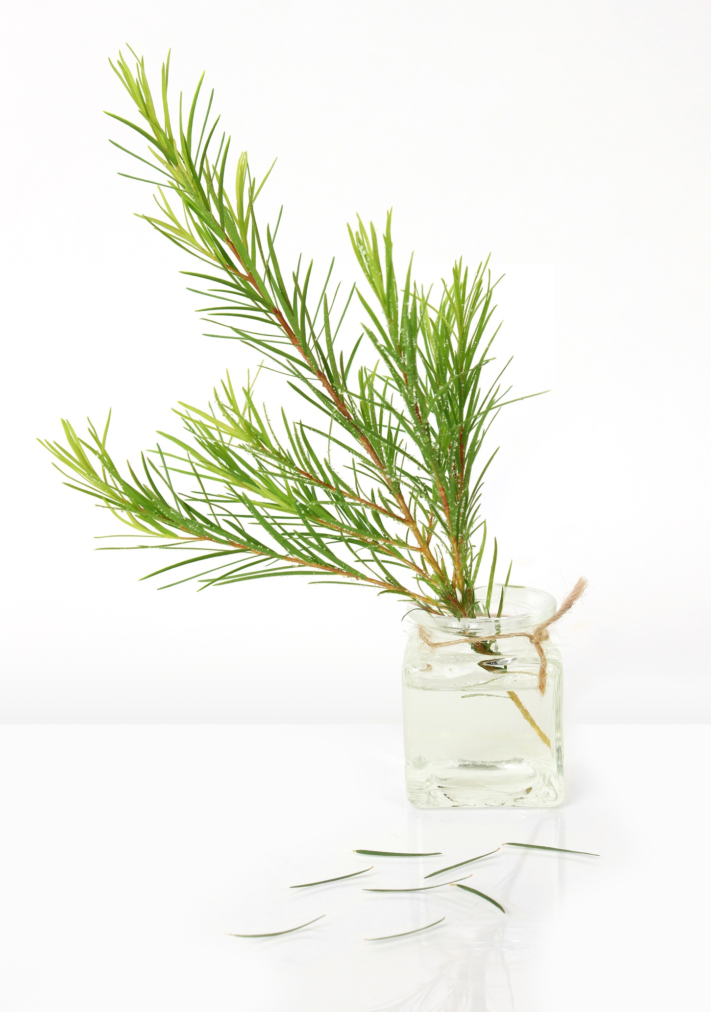 iStock-850937526 tea tree in bottle.jpg