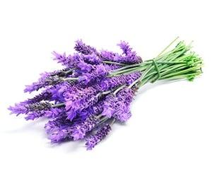 lavender (2) 379x324