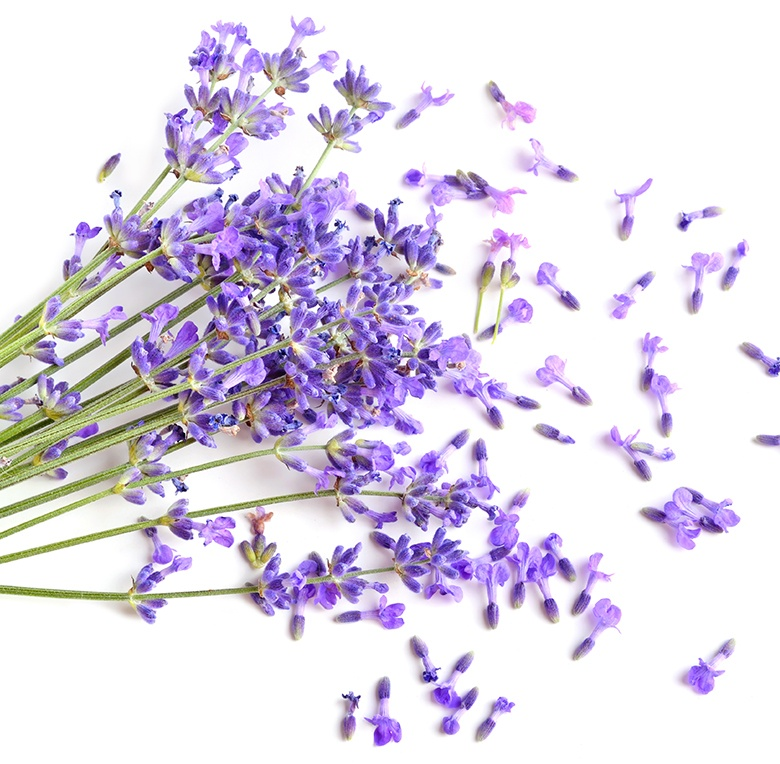 Lavender is a common scent for baby products.