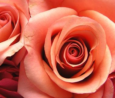 Peach Rose Flavor