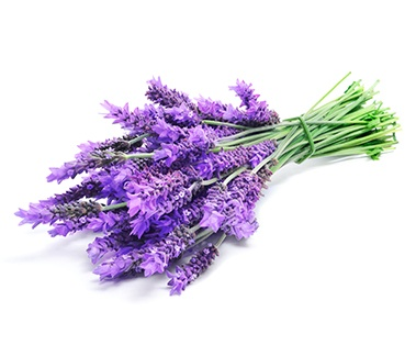 French Lavender, CAS 8000-28-0