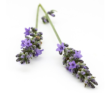 Lavender 40/42 Oil