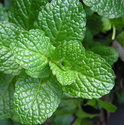 We have strong positions in mint, citrus, tea tree, and many other essential oils.