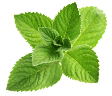 Peppermint from the US, India, and China