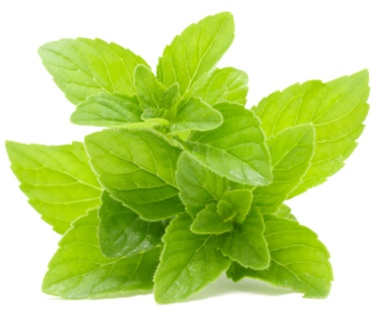 Spearmint from the US, India, and China